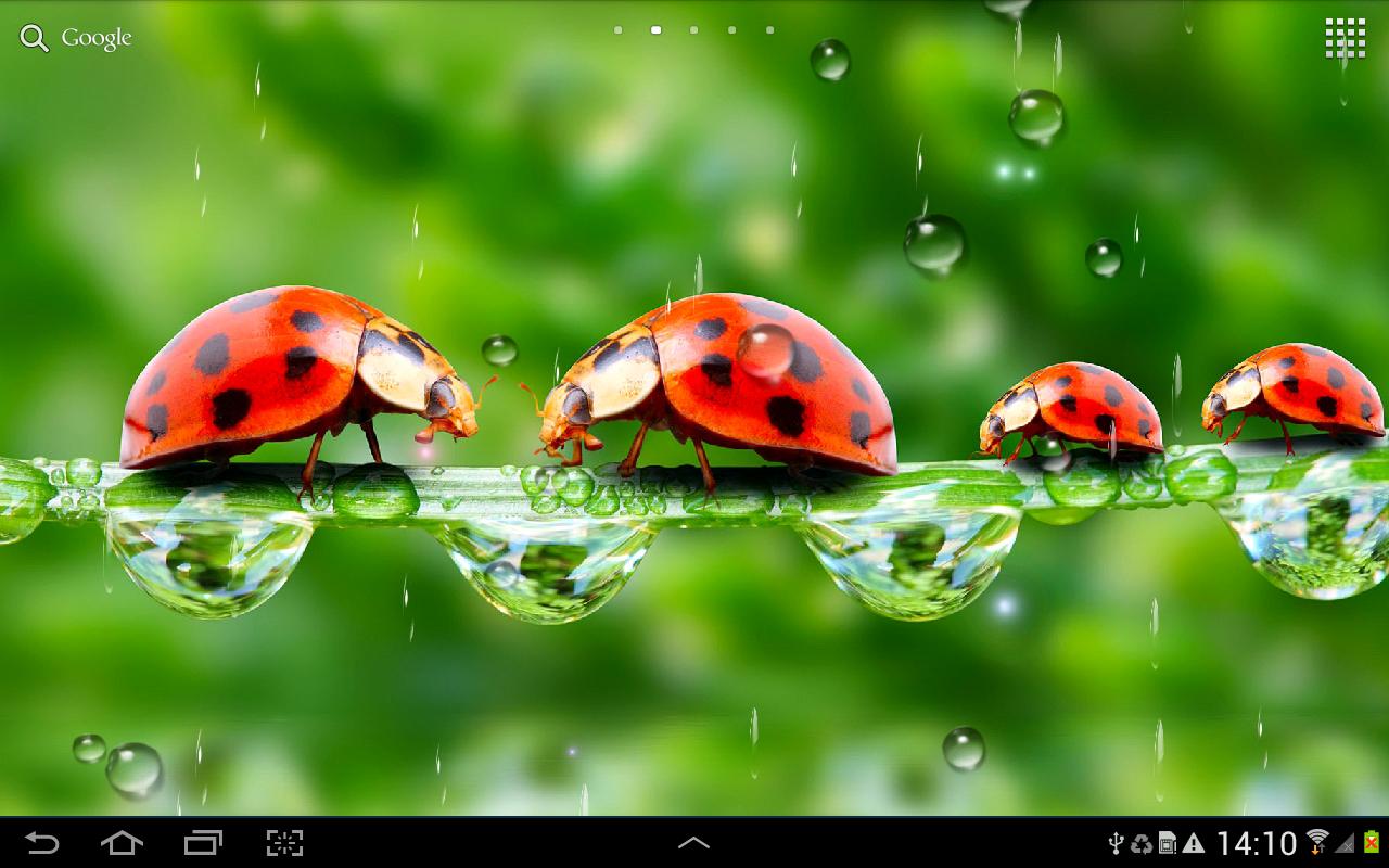 Живые обои скачать бесплатно на андроид животных