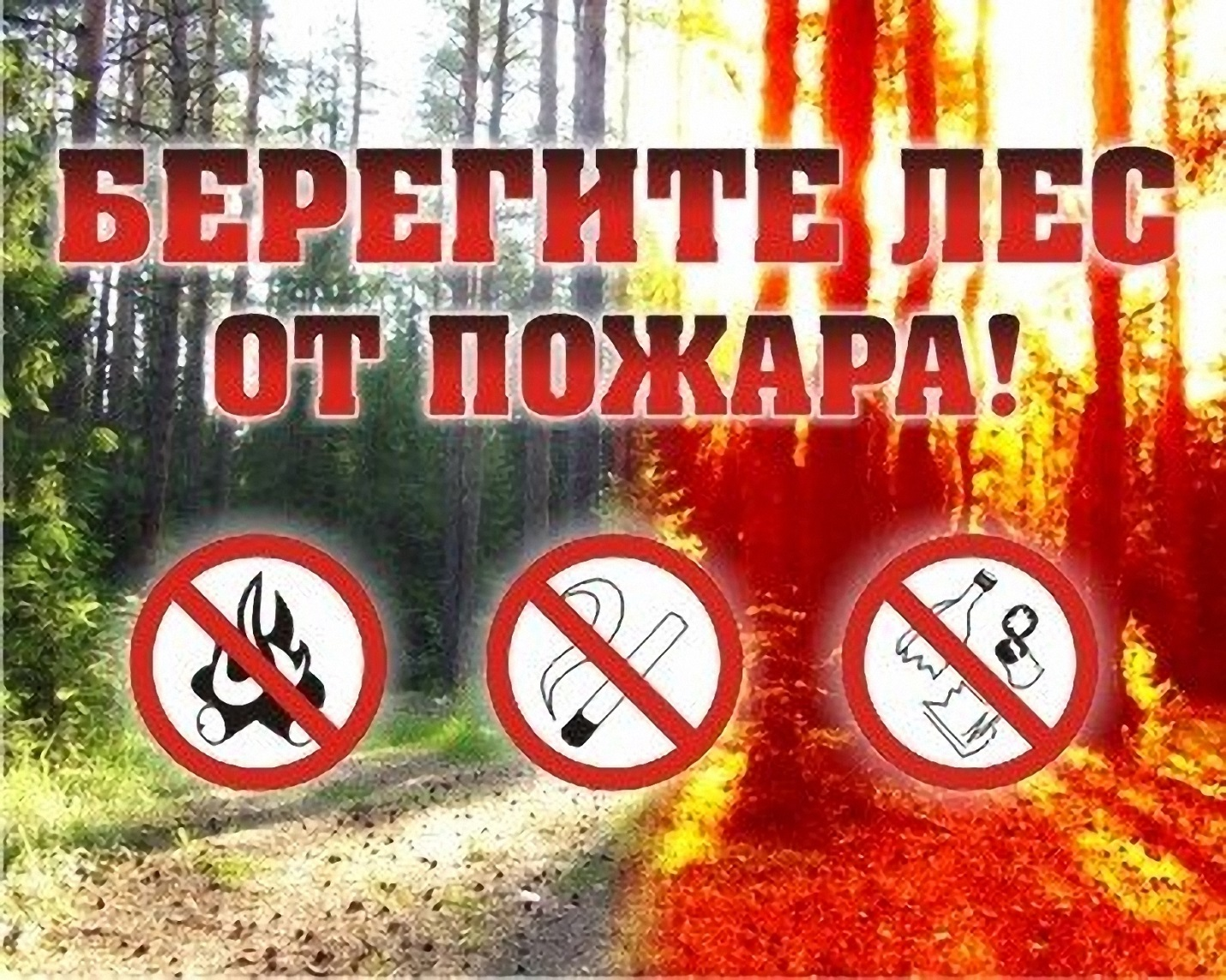 Android-приложение «Берегите лес» поможет в борьбе с пожарами