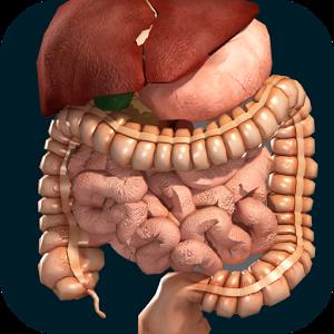 3D внутренние органы анатомия
